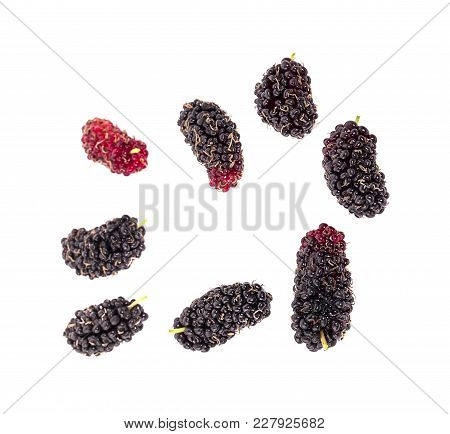 Mulberry Fruit, Mulberry Isolated On White Background.