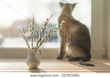 Willow Catkins In Vase, Wood Sill, On Background Cat Looking Out The Window, Toned