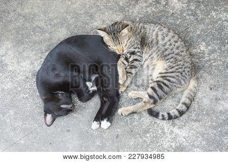 Best Friends. Two Sweet Little Kittens Sleeping Lazy On Street. Friends Together. Forever Friends Ca