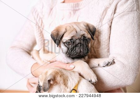 Woman with cute pug puppies at home, closeup