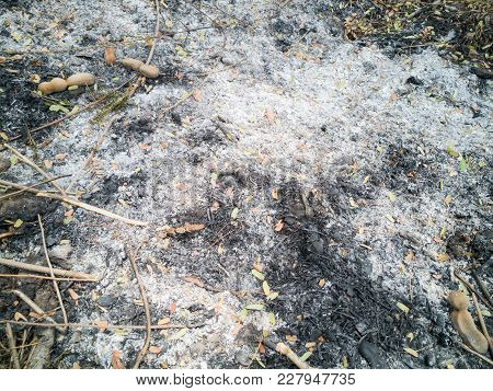 Burnt Dry Grass, Black Coals From The Grass., Summer Drought