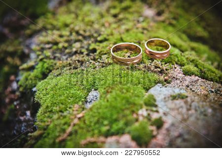 Beautiful Gold Rings Lie On  Moss