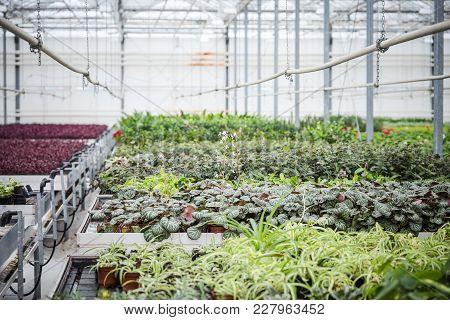 Annual Flower Seedlings In The Modern Greenhouse In Spring