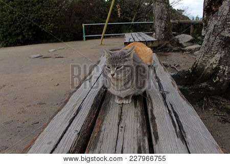 Cats Chilling Out At Karatsu Castle Complex.