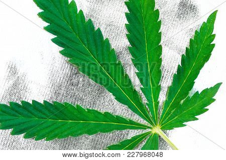 Green Leaf Of Marijuana, Cannabis Close Up On Silvery Background