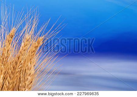 Sheaf Of Barley With The Blue Sky