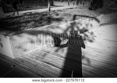 Photographer Uses His Shadow To Catch A Kitten Street. Cat Sitting In The Shadow Of A Man. Magnifice