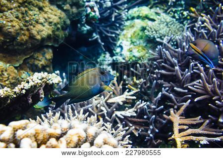 Tropical Corals And Fish On Reef In Indian Ocean.