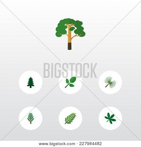 Icon Flat Nature Set Of Oaken, Spruce Leaves, Hickory And Other Vector Objects. Also Includes Leaf,