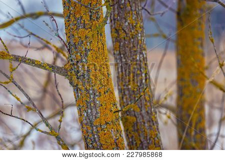 Lichens On A Tree Trunk In Podlasie Region Of Poland