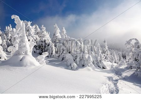 On A Frosty Beautiful Day Among High Mountains And Peaks Are Magical Trees Covered With White Fluffy