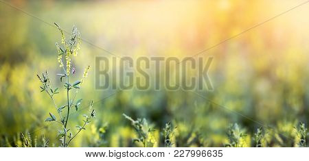 Spring, Springtime Concept - Web Banner With Blank, Copy Space