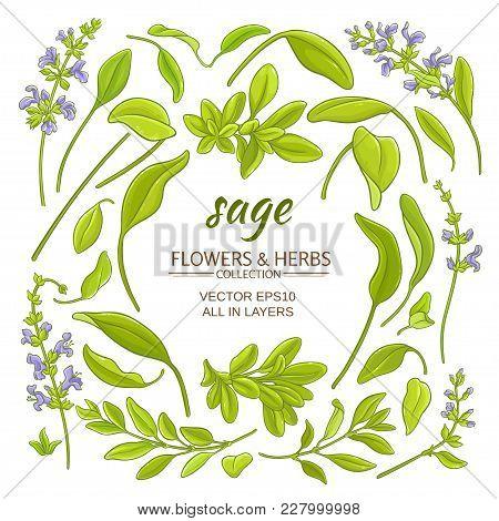 Sage Plant Elements Set On White Background
