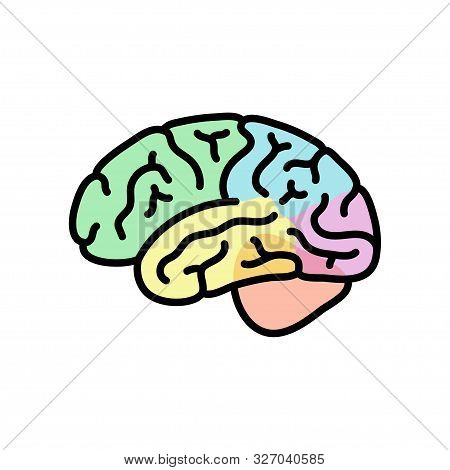 Vector Isolated Illustration Of Human Brain Anatomy Cerebrum And Cerebellum. Brain Structure Medical