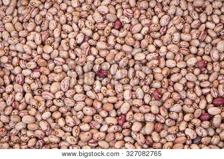 Thousands Of Beans Of Pinto Quality Also Called Borlotto In Italian Language
