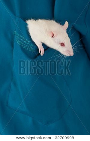 White Rat In A  Pocket