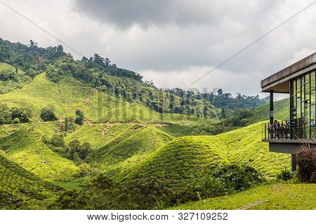 Cameron Highlands Malaysia. 10 March 2019.tea Plantations In The Cameron Highlands In Malaysia