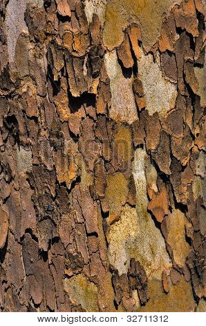 Background - sycamore bark, with the loose crusts poster