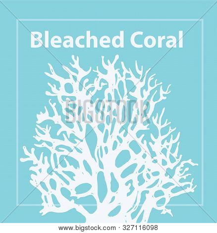 Bleached Coral. Trendy Color Of 2020. Coral Bleaching Occurs Rising Sea Temperatures And Global Warm