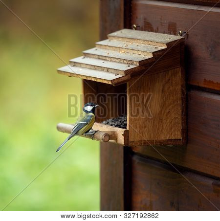 Tit sits on a wooden feeding trough poster