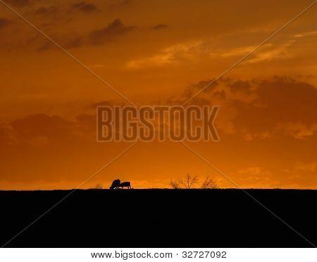 allein bei Sonnenuntergang