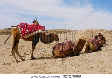 Landscape View Of Water Yadan Geopark And Camel In Dunhuang Gansu China