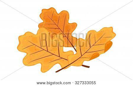 Yellow And Orange Senescent Leaves Of Oak Tree. Melancholy, Sadness Due To Finishing Of Vacation, Wa