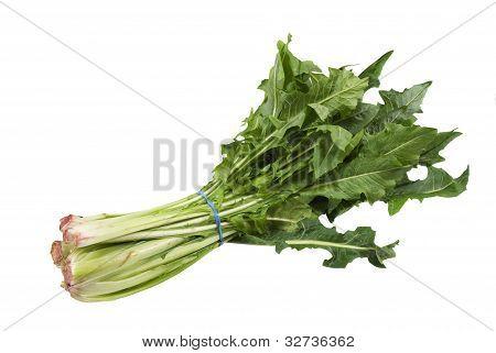 fresh dandelion-pissenlit