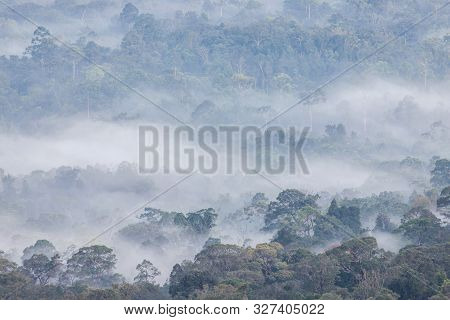 Misty Landscape With Asian Tropical Rainforest In Khao Yai National Park In Thailand