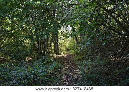 Footpath In A Lush Greenery With Light In The End By Early Fall Season