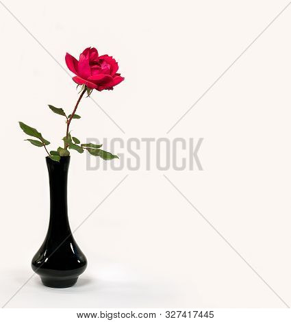 Single Red Rose In Black Vase Isolated On White Background
