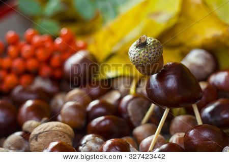 Animal Made Of Horse Chestnut Seed, Acorn And Safety Maches On Defocused Background Made Of Autumn Y