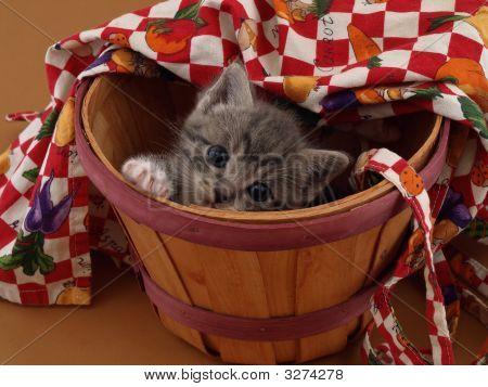 Bushel Of Kitty