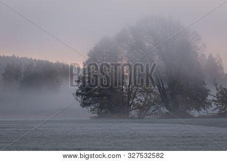 Autumn Sunrise In Coutryside. Trees In Fog At Frozen Plains. Brisk Morning In Lazy Rrural Scenery