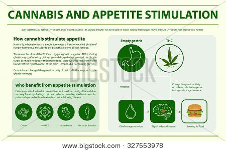 Cannabis And Appetite Stimulation Horizontal Infographic Illustration About Cannabis As Herbal Alter