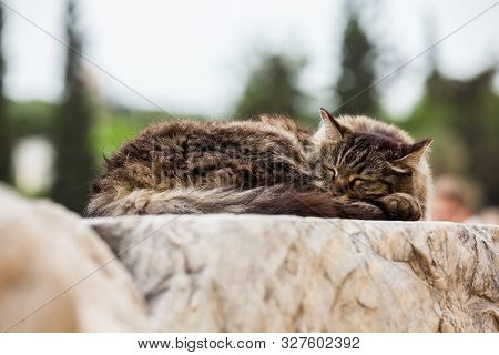 Cat Sleeping At The Ruins Of The Theatre Of Dionysus Eleuthereus The Major Theatre In Athens And Con