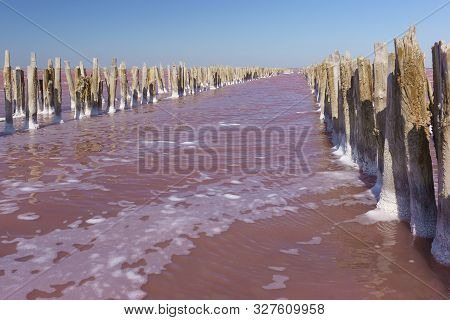 Pink Lake Sasyk Sivash In The Western Part Of The Crimean Peninsula, Yevpatoria. The Remains Of A Wo