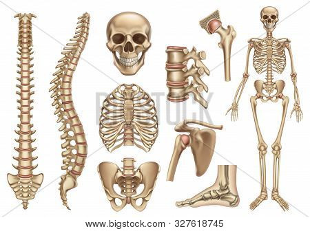 Human Skeleton Structure. Skull, Spine, Rib Cage, Pelvis, Joints. Anatomy And Medicine, 3d Vector Ic