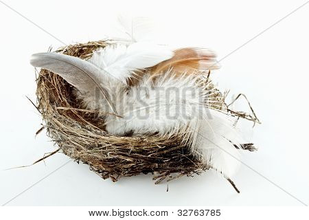 Bird Nest With Feathers