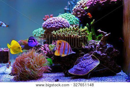 Amazing Dream Colorful Coral Reef Reef Aquarium Tank