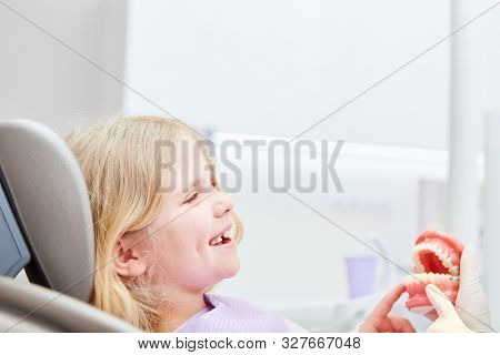 Happy girl as a patient sits fearless at the dentist with denture model for intuition