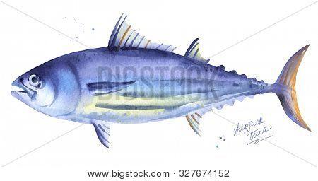 Striped tuna, Skipjack tuna. Hand drawn watercolor fish illustration on white background