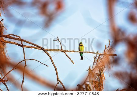 A Bee-eater Bird Roosting Alone On A Tree Branch