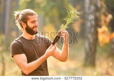 Young forest worker or farmer with a pine seedling during afforestation