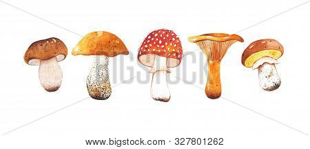 Watercolor Hand Drawn Set Of Autumn Mushrooms. Bright And Colorful Forest Elements. A Beautiful Coll