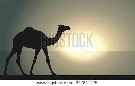 Camel In Desert Walking Forward. Camel Graphic Sign At Sunrise Or Sunset Background. Camel Symbol Of