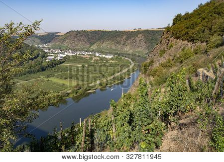 Top View On Mosel River Valley And Green Terraced Vineyards, Germany, Production Of Quality White An