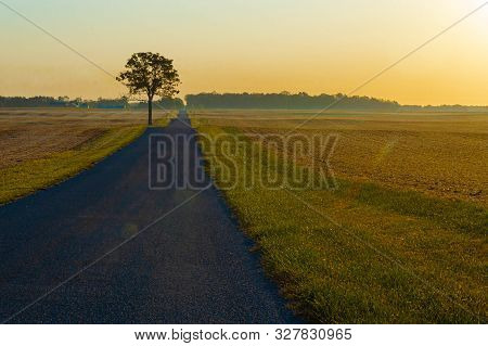 Golden Light At Sunrise Along A Rural Road With A Hickory Tree And Harvested Fields