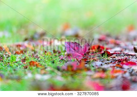 Red maple leaves on the ground with shallow depth of field.