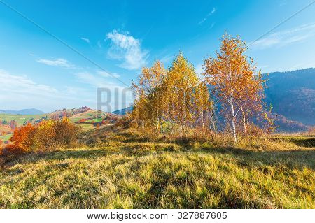 Birch Trees On The Meadow In Mountains. Beautiful Autumn Landscape. Trees In Lush Yellow Foliage. Vi